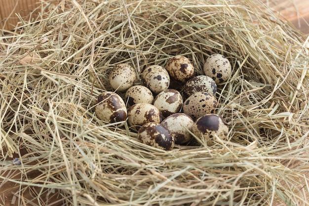 Uova di quaglia in un nido di fieno primo piano