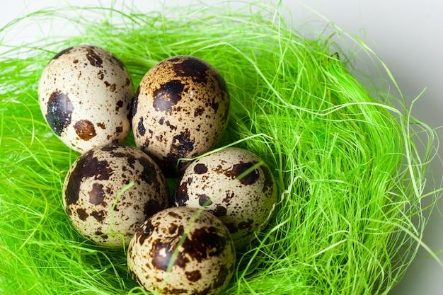 Uova di quaglia nel nido
