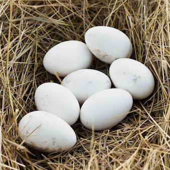 Uova fresche organiche all'azienda agricola dai polli