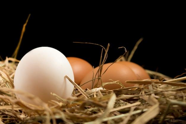 Uovo. cannuccia. su legno sfondo nero