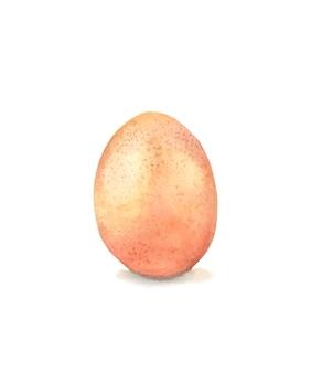 Uovo di gallina su uno sfondo bianco disegno ad acquerello