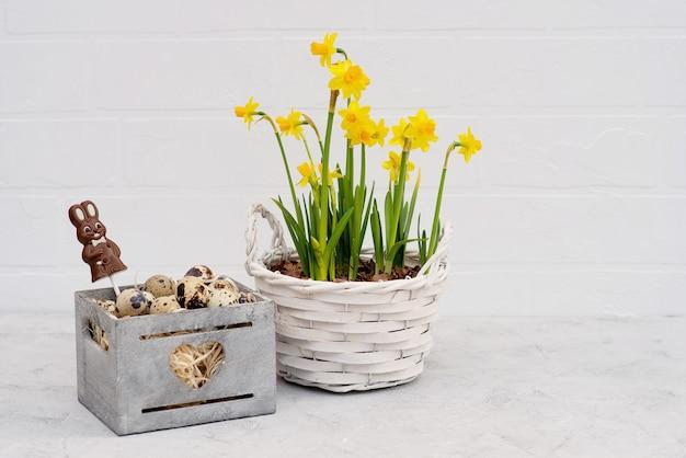 Uovo di quaglia in un cestino di legno con fiori freschi di narcisi e un coniglietto di pasqua al cioccolato.