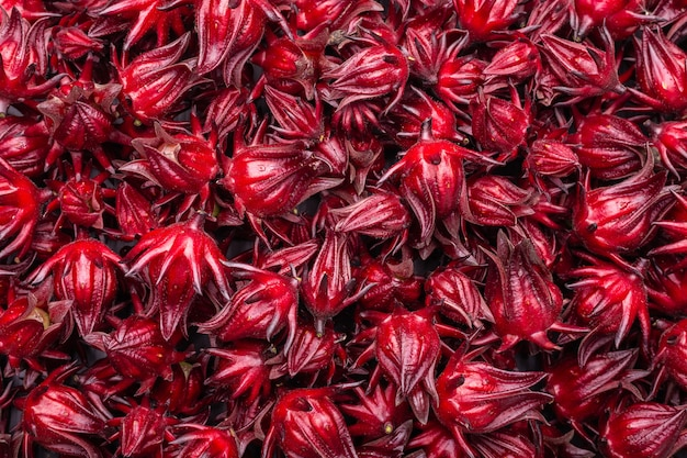 Uso rosso fresco di rosella per il concetto dell'erba o dell'alimento