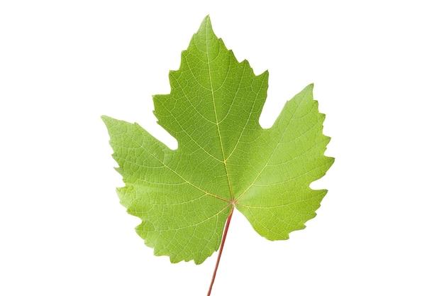 Uva matura con foglie isolate su bianco