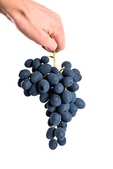 Uva nera con goccia d'acqua isolata su fondo bianco