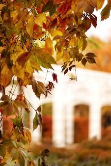 Uva selvaggia con sfondo autunnale di foglie rosse
