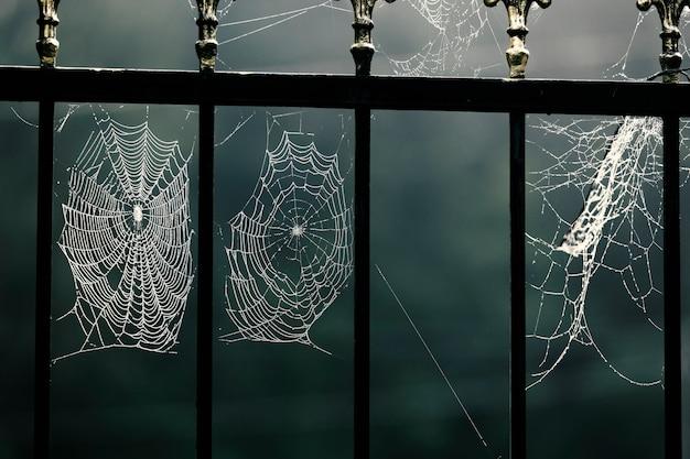 Vacanze di halloween, albero spettrale, ragno che salta, ebook, sfondo, buio, mitologia greca, sinistro, gografo