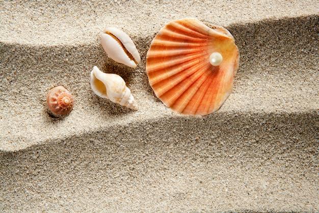 Vacanze estive del guscio della vongola della perla della sabbia della spiaggia