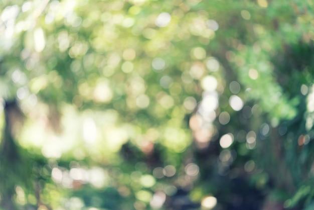 Vago degli alberi in parco, modello leggero del bokeh sfondo astratto