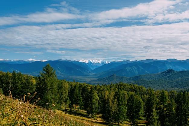 Valle della montagna con alberi e cielo nuvoloso