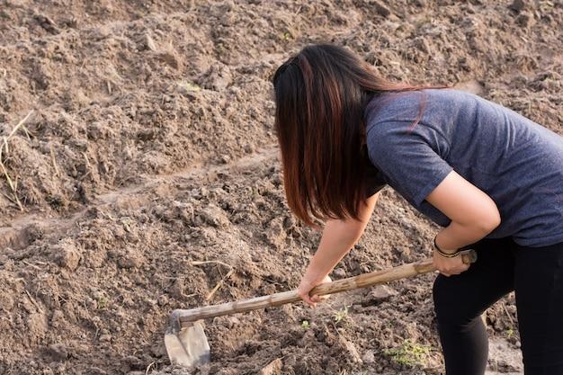 Vanga della tenuta dell'agricoltore della donna al campo nel phanom di nakhon, tailandia