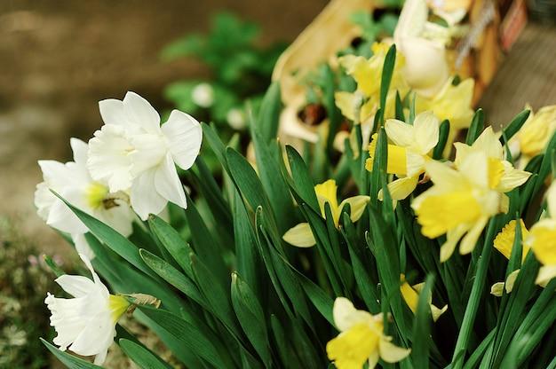 Vari fiori e piante all'interno della serra. fiori di primavera.