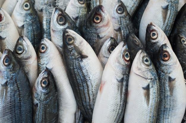 Vari pesce fresco e frutti di mare al mercato ittico