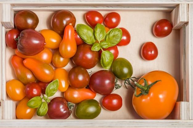 Vari pomodori e foglie variopinti del basilico in una scatola di legno sulla tavola di legno bianca. avvicinamento.