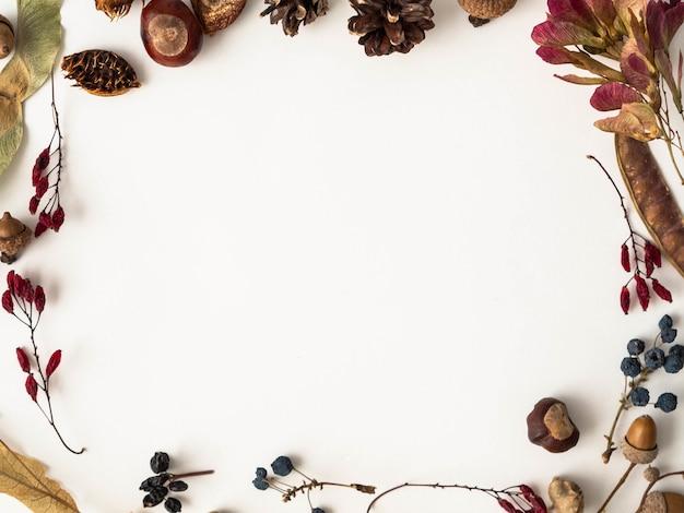 Vari semi del telaio selvaggio degli alberi isolati su fondo bianco