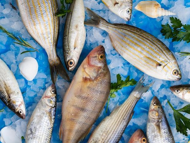 Varietà del primo piano di pesci freschi su ghiaccio