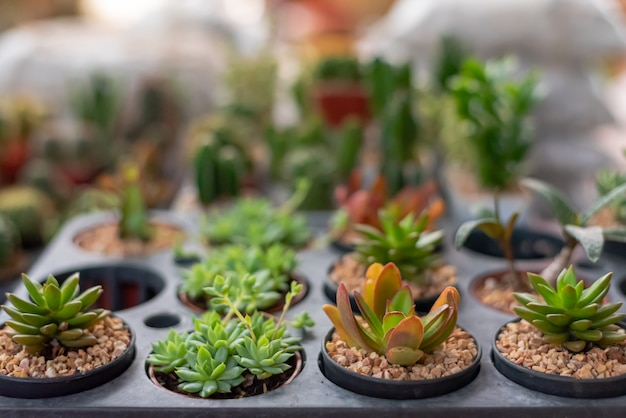 Varietà di cactus nel piccolo vaso succulente. piante da appartamento in vaso