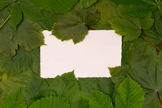 Varietà di foglie verdi con spazio per il mock-up
