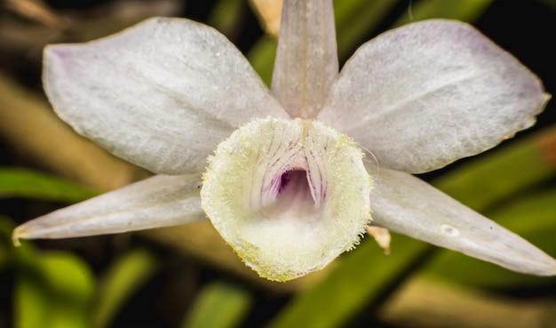 Varietà di orchidee colorate
