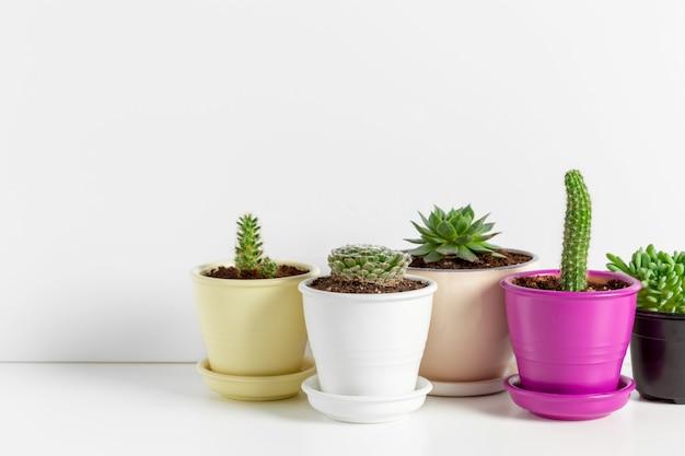 Varietà di piante grasse in diversi vasi