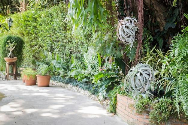 Varietà di piante verdi in giardino all'aperto
