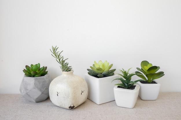 Varietà di succulente in vaso