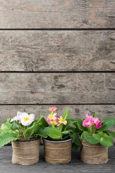 Vasi di fiori in fiore di copia-spazio