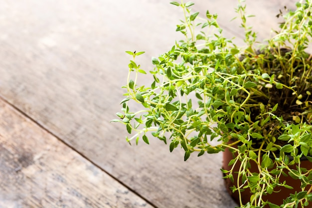 Vaso con la pianta del timo sullo spazio di legno della copia della tavola