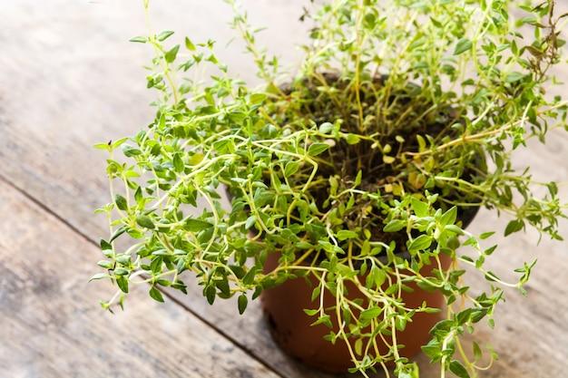 Vaso con la pianta di timo sulla tavola di legno