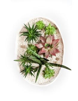 Vaso da fiori bianco ceramico con varietà di piante grasse isolate