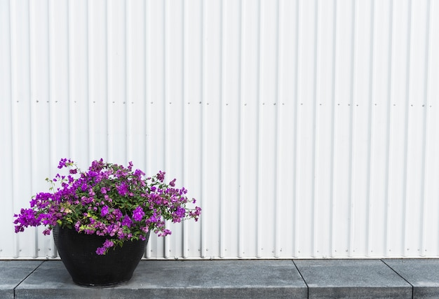Vaso di bouganville su una passeggiata laterale