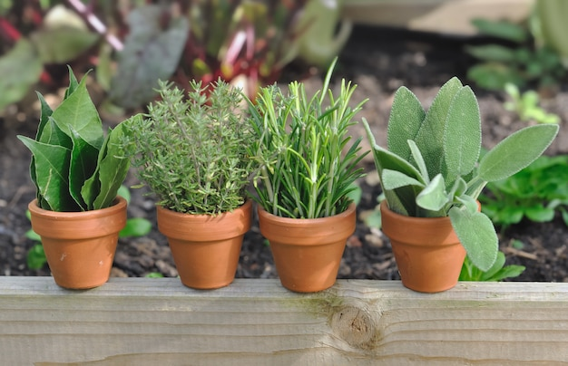 Vaso di erbe varie