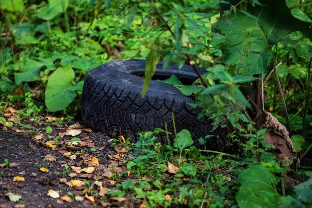 Vecchia gomma nera nella foresta vicino alla strada