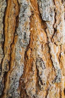 Vecchia struttura della corteccia di albero