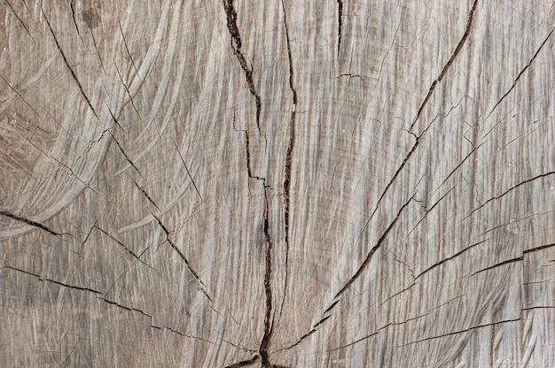 Vecchia trama di legno naturale del tronco d'albero tagliato
