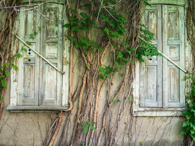 Vecchie finestre di legno ricoperte di edera. la facciata del vecchio edificio è ricoperta di legno di vimini