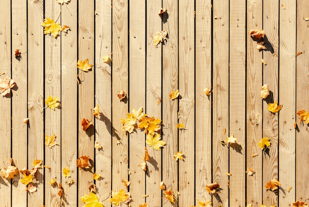 Vecchie schede con foglie di acero gialle