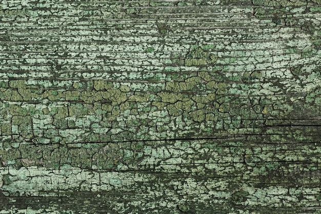 Vecchio albero di legno con texture vintage