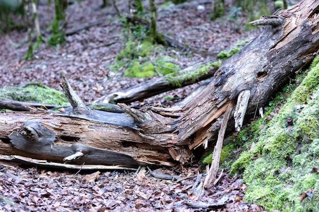Vecchio albero rotto