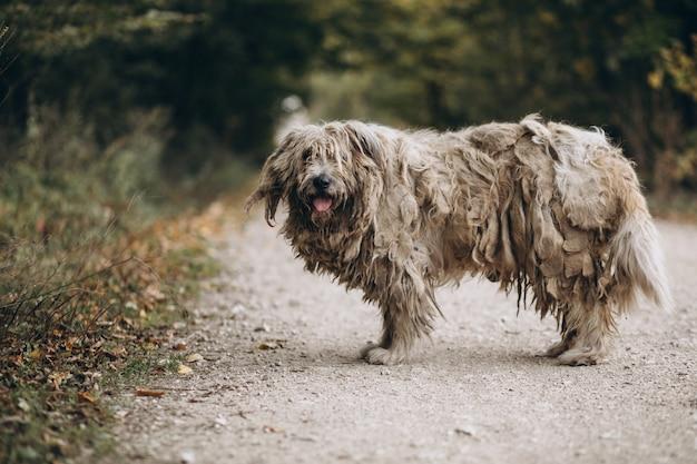 Vecchio cane senza tetto che cammina nel parco