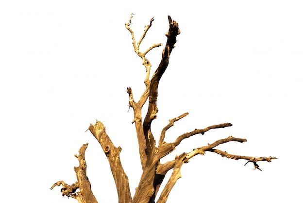 Vecchio e ramo di albero morto isolato su sfondo bianco.