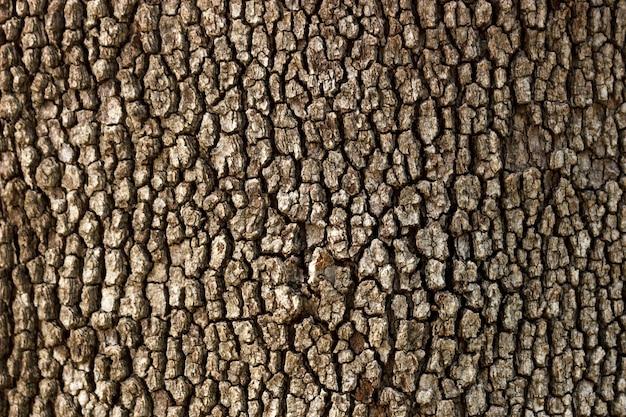 Vecchio fondo di legno di struttura dell'albero nel giorno soleggiato
