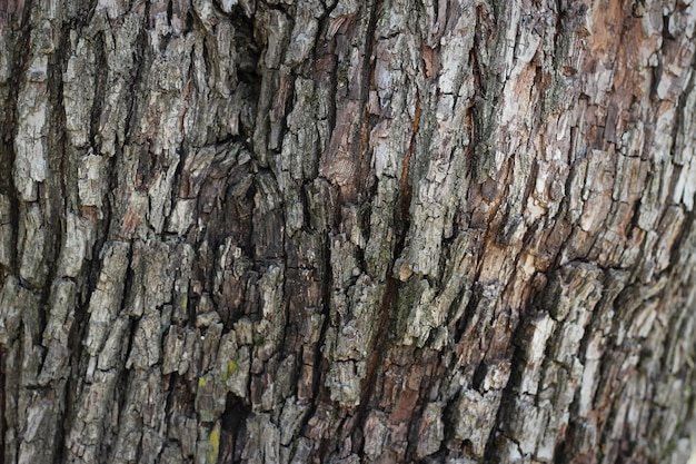 Vecchio, legno, corteccia, albero, struttura, fondo, modello
