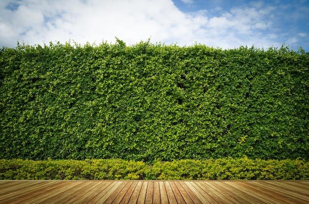 Vecchio legno o pavimentazione e pianta in giardino decorativo