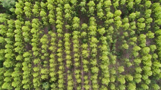 Veduta aerea della foresta di alberi verdi