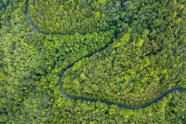 Veduta aerea della strada attraverso la foresta.