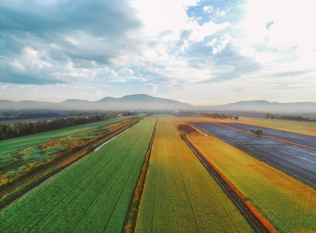 Veduta aerea delle risaie verdi