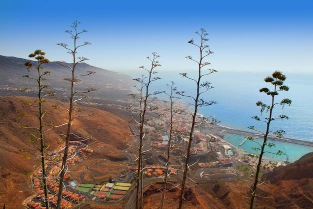Veduta aerea di santa cruz de la palma con agave