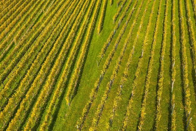 Veduta dall'alto di un campo coperto di erba e fiori colorati sotto la luce del sole