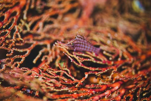 Ventilatore di mare con un pesce rosa
